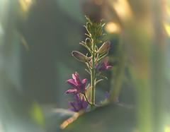 () Tags: flower delphinium