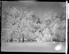 Blizzard decorates Boston and Franklin Park (Boston Public Library) Tags: parks bostoncommon capitols blizzards massachusettsstatehouse lesliejones