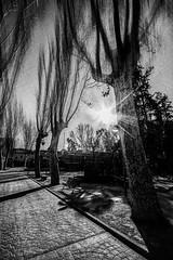 Arbres misteriosos (Vicent.Galiana) Tags: blackandwhite bw blur tree blancoynegro movement movimiento bn desenfoque rbol arbre moviment plantes misterioso llum neus llac misterious blancinegre necs mrcia desenfocament misteris