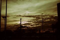 Birds (Génial N) Tags: sky birds pentax houston pentaxk01