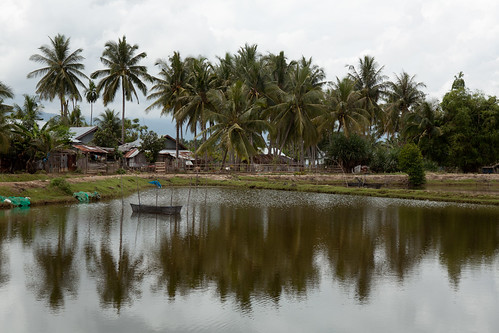 Shrimp pond in Aceh, Indonesia. Photo by Mike Lusmore/Duckrabbit, 2012.