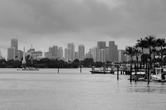 Downtown Miami (Niwreig) Tags: ocean city beach water rain buildings palms boats 50mm bay cityscape skyscrapers florida miami sony south overcast coastal inlet fl yachts inter nex nex6