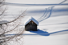 a winter tale (Claudia Gaiotto) Tags: winter snow queen neve altoadige sudtirolo pratopiazza awintertale