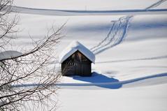 a winter tale (Claudia Gaiotto) Tags: winter snow queen neve altoadige sudtirolo pratopiazza awintertale