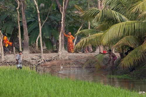 Shrimp farming near Khulna, Bangladesh. Photo by Mike Lusmore/Duckrabbit, 2012.