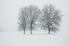 Michigan in Winter (Kathy~) Tags: three 3 trees fog snow winter tree annarbor michigan herowinner fotocompetition fotocompetitionbronze gamewinner tphofweek201 thepinnaclehof friendlychallenges gamex2sweepwinner ultraherowinner fotocompetitionsilver fotocompetitiongold instagram