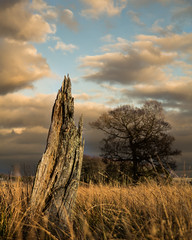Splintered (Chris Shanks) Tags: old chris sunset sky sunlight colour tree broken grass clouds canon landscape golden estate tamron shanks splintered clerk