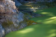 XD0A3133 (TheMillus) Tags: newzealand northisland waiotapu oceania devilsbath