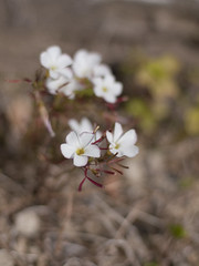 (Polotaro) Tags: flower nature pen olympus   zuiko ep1    gzuiko50mmf14