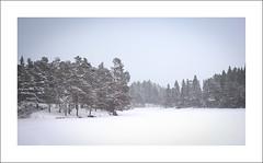 Snowy Haukvatnet II (Christa (ch-cnb)) Tags: trees winter lake snow norway forest norge frozen woods skiing crosscountry fujifilm snowing trondheim 169 srtrndelag bymarka trndelag f31fd haukvatnet