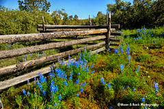 Lets Pretend ... (Aspenbreeze) Tags: flowers summer rural fence countryside spring colorado country woodenfence wildflowers mountainscape lupines mountainflowers splitrailfence aspenbreeze moonandbackphotography topphotospots tpslandscape gpsetest bevzuerlein