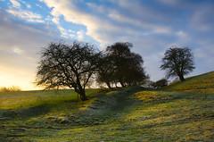 Frosty morning in Leicester (Anniison) Tags: morning winter sunrise landscape frost bestevergoldenartists besteverdigitalphotography