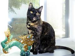 Nina and the Garden Dragon (Old Stone Photography) Tags: pet cat feline tortoiseshell irony gratitude dirtywindow tortitude 27365