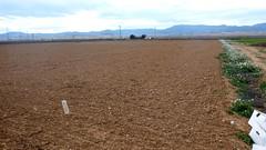 0004VIÑEDOS-plantar-injertos-(22-3-2013)-P1020006 (fotoisiegas) Tags: viticultura viñas viñedos cariñena plantar injertos fotoisiegas lospajeras