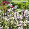 the smell of garden (mariola aga) Tags: flowers summer nature garden dof bokeh quote smell glencoe chicagobotanicgarden thegalaxy