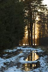 LOS-1 (w11buc) Tags: sunset twilight aberdeenshire swans aberdeen westhill lochofskene