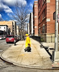 A Walking Ray Of Sunshine (cyndisuewho) Tags: nyc woman sun sunshine yellow clouds walking harlem streetphotography streetlife blueskies turban headwrap