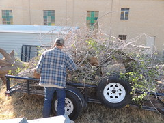 One of six trailer loads carried away (Hairlover) Tags: trees tree dead stump removal stumps
