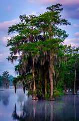 Dawn at Lake Martin (Gerard Plauche) Tags: trees nature water birds sunrise outdoors dawn spring wildlife swamp cypress lakemartin gsccc