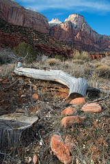 Exploration (dbushue) Tags: trees red orange mountains nature landscape utah nikon rocks hike trail zionnationalpark virginriver coth supershot 2013 parustrail absolutelystunningscapes damniwishidtakenthat coth5 d800e dailynaturetnc13