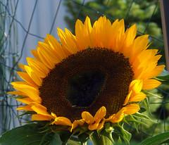 "For my dear Friends!!! (mikazu001 away) Tags: holland carmen inmemoriam hgv ©allrightsreserved fantasticnature fugitivemoment lovelymotherearth"" itsallaboutflowers floralaromas odetojoyodeàalegria johancarmen creativephotocafe"