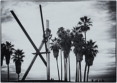 We Have Never Been Very Pure (swanksalot) Tags: blackandwhite bw tree beach silhouette clouds la losangeles stranger palm venicebeach toned explored 18mm200mm