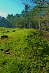 Photo of Moss on the earthworks at Galley Hill Fort, Sandy