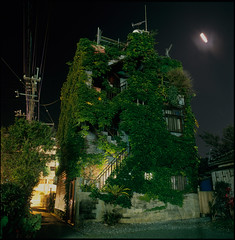 (akira ASKR) Tags: longexposure fuji ivy okinawa  provia100f distagon hasselblad500cm  nago rdpiii