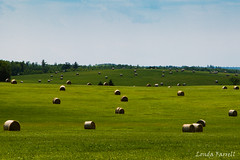 Hay time (londa.farrell) Tags: 2016 24105 canada canon canondslr canoneos7dmarkii july novascotia outdoor summer hay field grass sunny rollinghills haybales rural farming landscape