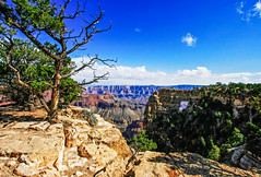 Grand Canyon, North Rim (Buck--Fever) Tags: northkaibabnatforest northrim northrimgrandcanyon canon40d canon arizona arizonaskies caperoyal angelswindow landscape clouds