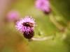 2016-09-04_16-21-39 (torstenbehrens) Tags: nature bokeh panasonic dmcg1 lumix