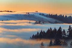 Foggy Tendrils (pixelmama) Tags: california pixelmama mounttamalpaisstatepark mounttam fog karlthefog millvalley marincounty