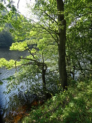 along the lake (francesca.clemente) Tags: eifel nationalpark germany hike trekking nature paths lake rur travel trip green europe asia america holiday bike art architecture city landscape sea italy sky cat cats