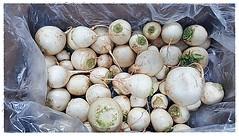 W36 White Turnip Cert Org