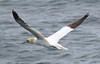 Birds at Sea - Wasservögel (SoniaShari) Tags: d island wasser water eau vögel vogel bird oiseau seagull puffin möve tölpel papageientaucher meer mar ocean