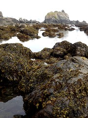 Crescent City - low tide (h willome) Tags: 2016 california crescentcity ocean tidepools shoreline