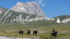 IMG_8468.JPG (gianpierocornice) Tags: gransasso campoimperatore abruzzo montagna hourse italy mountains piccolotibet