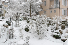 Our garden dressed up in winter clothes (Rosarian49) Tags: winter snow gardens trellis azalea zrich urbangarden citygarden cornuskousa hirslanden rosarian49