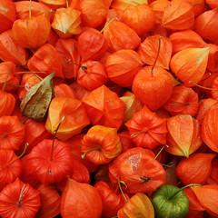 Physalis (duqueıros) Tags: red food rot fruit square market sweet markt beere frucht süss physalis nahrung andenbeere kapstachelbeere duqueiros