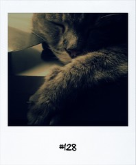 "#DailyPolaroid of 3-2-13 #128 • <a style=""font-size:0.8em;"" href=""http://www.flickr.com/photos/47939785@N05/8458593036/"" target=""_blank"">View on Flickr</a>"