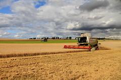 The Barley and the Barn (georg.schmidt) Tags: summer sky sun hot field barley clouds barn canon germany farm grain harvest combine thunderstorm agriculture thunder harvester combineharvester claas lexion eos7d lexion570 corncombine efs1585isusm