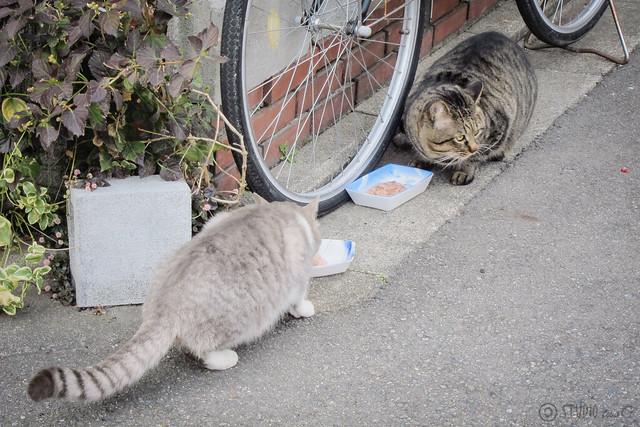 Today's Cat@2013-02-12
