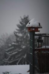 Wintereinbruch (T.Flat ) Tags: schnee winter snow germany deutschland hessen hiver neige allemagne taunus hesse kelkheim germanwinter vordertaunus deutscherwinter hiverallemand