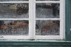 Talvemälestused, suvemälestused (anuwintschalek) Tags: winter window garden tallinn estonia hoarfrost fenster january veranda ornament garten raureif aken eesti eisblumen aed estland talv jäälilled iceflowers nõmme 2013 18200vr härmatis pääsküla d7k nikond7000 frostblumen