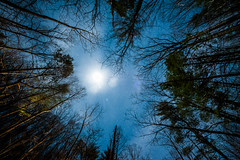 Partly Cloudy, Mostly Trees (jon_beard) Tags: trees sky moon up night clouds dark stars