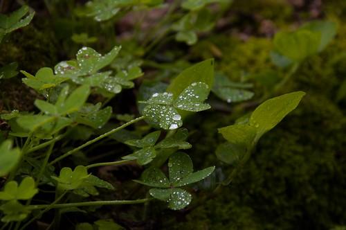 Rain perls ©  Still ePsiLoN