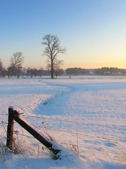 snowy field (Foto Dominic) Tags: morning winter light snow field sunrise sneeuw veld ochtend zonsopgang mygearandme mygearandmepremium mygearandmebronze fotodominic vigilantphotographersunite vpu2