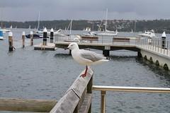 Angles (Justine Gordon) Tags: water birds sydney