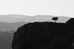 Solo su abissi Pieni di vuoto (bebo82) Tags: sky blackandwhite bw tree pentax cielo albero precipice biancoenero precipizio pentaxk20d pentaxk20 rakitovec