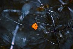 Tempte (veronix1) Tags: primavera forest vent leaf spring wind foglia tempest blatt wald printemps fort vento feuille frhling bosco tempesta tempte primavara vant padure frunza furtuna veronix1 okdeshom